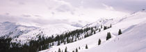 Trees at a ski resort, Kitzbuhel Alps, Wildschonau, Kufstein, Tyrol, Austria by Panoramic Images