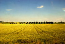 9853yellowfield-treeline