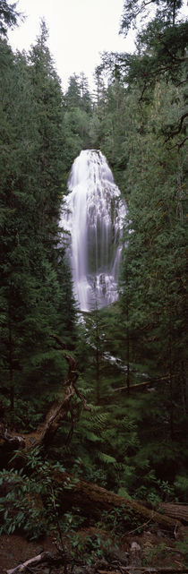 Willamette National Forest, Lane County, Oregon, USA by Panoramic Images