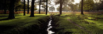 Stream passing through a park, Richmond Park, London, England by Panoramic Images