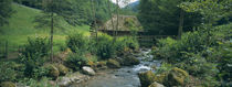 River flowing through forest, Black Forest, Glottertal, Germany by Panoramic Images