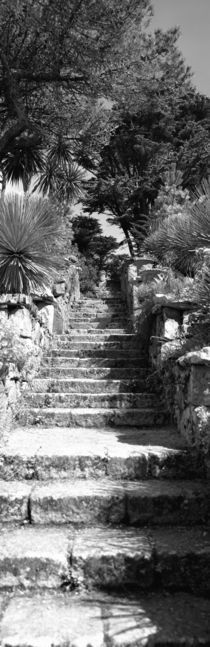 Tresco Abbey Garden, Tresco, Isles Of Scilly, England by Panoramic Images