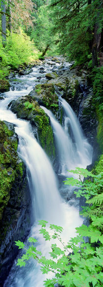 Sol Duc Falls Olympic National Park WA by Panoramic Images