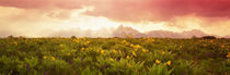 Panorama Print - Grand Teton Park, Wyoming, USA von Panoramic Images