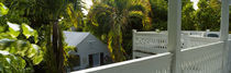 Trees near a house, Key West, Florida Keys, Florida, USA by Panoramic Images