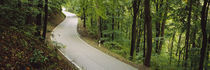 Empty road running through a forest, Stuttgart, Baden-Wurttemberg, Germany by Panoramic Images