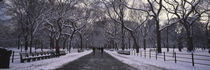 Bare trees in a park, Central Park, New York City, New York State, USA by Panoramic Images