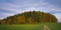 Trees in a field, Aargau, Switzerland von Panoramic Images