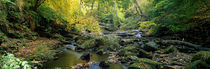 Stream Flowing Through Forest, Eller Beck, England, United Kingdom by Panoramic Images