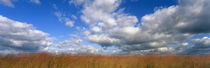 Hayden Prairie, Iowa, USA by Panoramic Images
