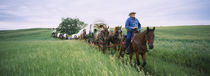 Historical reenactment of covered wagons in a field, North Dakota, USA by Panoramic Images