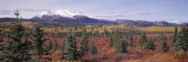 Canada, Yukon Territory, View of pines trees in a valley by Panoramic Images