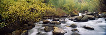 River passing through a forest, Inyo County, California, USA von Panoramic Images