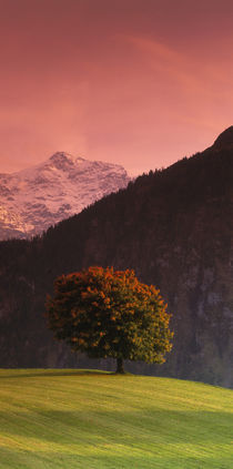 Switzerland, Alps by Panoramic Images