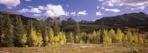 Aspen trees with mountains in the background, Colorado, USA by Panoramic Images