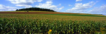 Panorama Print - Kornfeld mit Traktor, Carroll County, Maryland, USA von Panoramic Images