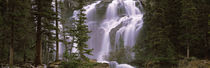 Waterfall in a forest, Banff, Alberta, Canada by Panoramic Images