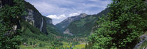 Forest, Lauterbrunnen Valley, Bernese Oberland, Berne Canton, Switzerland by Panoramic Images