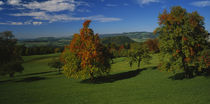 High angle view of pear trees on a field, Aargau, Switzerland by Panoramic Images