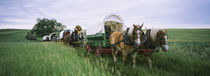 Historical reenactment, Covered wagons in a field, North Dakota, USA by Panoramic Images