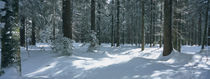Trees in a forest, Schwarzwald, St. Peter, Germany von Panoramic Images