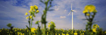 Low Angle View of Oilseed rape flowers and a wind turbine in a field, Germany by Panoramic Images