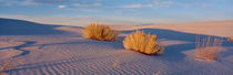USA, New Mexico, White Sands, sunset von Panoramic Images