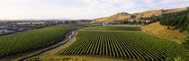 Mission Vineyard, Hawkes Bay North Island, New Zealand by Panoramic Images