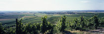 Vineyard, Bereich Steigerwald, Franconia, Germany von Panoramic Images