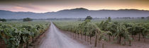 Road in a vineyard, Napa Valley, California, USA by Panoramic Images