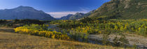 Trees in a valley, Waterton Lakes National Park, Alberta, Canada by Panoramic Images