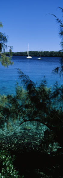 Sailboats in the ocean, Kingdom of Tonga, Vava'u Group of Islands, South Pacific by Panoramic Images
