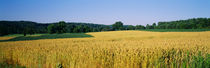 Field Crop, Maryland, USA by Panoramic Images