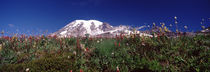 Wildflowers on mountains, Mt Rainier, Pierce County, Washington State, USA by Panoramic Images