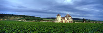 Grand Cru Vineyard, Burgundy, France by Panoramic Images