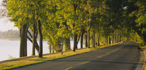 Trees along a road, Lake Washington Boulevard, Seattle, Washington State, USA by Panoramic Images