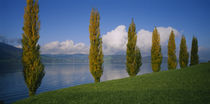 Row of poplar trees along a lake, Lake Zug, Switzerland von Panoramic Images