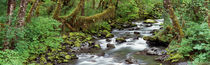 Creek Olympic National Park WA USA by Panoramic Images