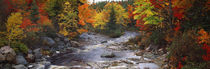 Stream with trees in a forest in autumn, Nova Scotia, Canada von Panoramic Images