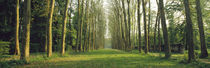 Trees Versailles France by Panoramic Images