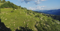 Flock of sheep grazing on a mountainside, Hautes Alpes, Switzerland by Panoramic Images