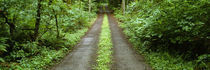 Lush foliage lining a wet driveway, Bainbridge Island, Washington, USA von Panoramic Images