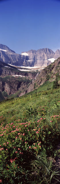 Alpine wildflowers on a landscape, US Glacier National Park, Montana, USA by Panoramic Images