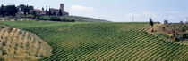 Vineyards and Olive Grove outside San Gimignano Tuscany Italy von Panoramic Images
