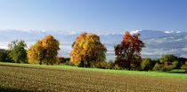 Switzerland, Swiss Midlands, pear orchard by Panoramic Images