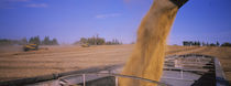 Combine harvesting soybeans in a field, Minnesota, USA von Panoramic Images