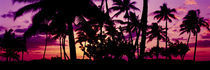 Silhouette of palm trees at sunset, Ko Olina, Oahu, Hawaii, USA von Panoramic Images
