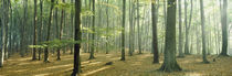 Woodlands near Annweiler Germany von Panoramic Images