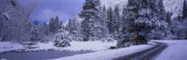 Winter Road, Yosemite Park, California, USA by Panoramic Images