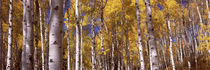 Forest, Grand Teton National Park, Teton County, Wyoming, USA by Panoramic Images